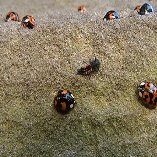 Image result for 'सेक्स रोग'से ब्रिटेन में आंतक मचाने वाले ये रहा कीड़े का सच…विडियो