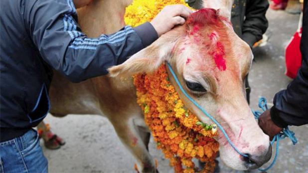 गाय की इस पूजा दूर होंगे, ग्रहों और वास्तु से जुड़े दोष